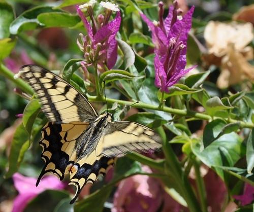 fil(et) à papillons - Page 6 005_5012