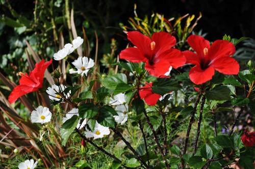 nos jardins prennent-ils des vacances ? 008_5011