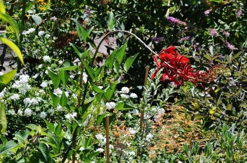 butinages du jour à l'ombre de nos plantes  - Page 2 028_5010