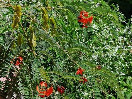 butinages du jour à l'ombre de nos plantes  - Page 2 034_4510