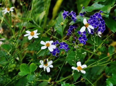 butinages du jour à l'ombre de nos plantes  - Page 2 035_4511