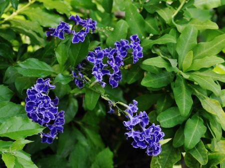 butinages du jour à l'ombre de nos plantes  - Page 2 036_4511