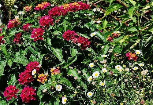 butinages du jour à l'ombre de nos plantes  - Page 2 040_5010