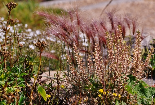 Jardin botanique alpin du Col du Lautaret dans les Hautes-Alpes (05) 099_5010