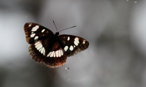 fil(et) à papillons - Page 7 Img_0012
