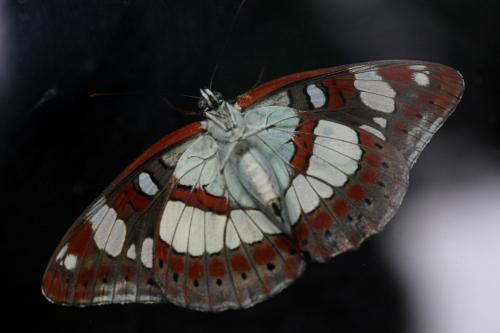 fil(et) à papillons - Page 7 Img_0013