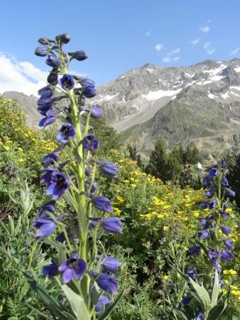 Jardin botanique alpin du Col du Lautaret dans les Hautes-Alpes (05) - Page 2 Rimg5112