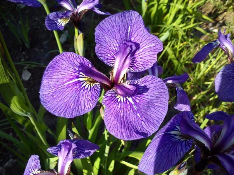Iris 2015 - Page 3 Xseto210