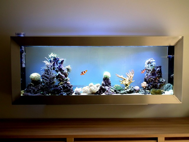 Bac de Mamsk - Reef plasma Dscf0410