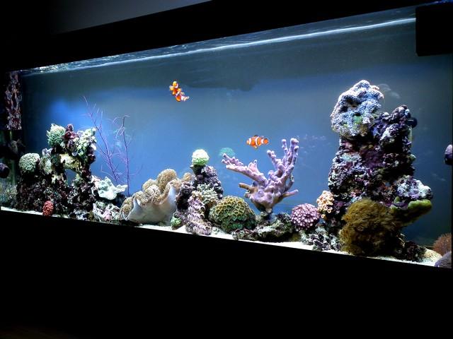 Bac de Mamsk - Reef plasma Dscf0510