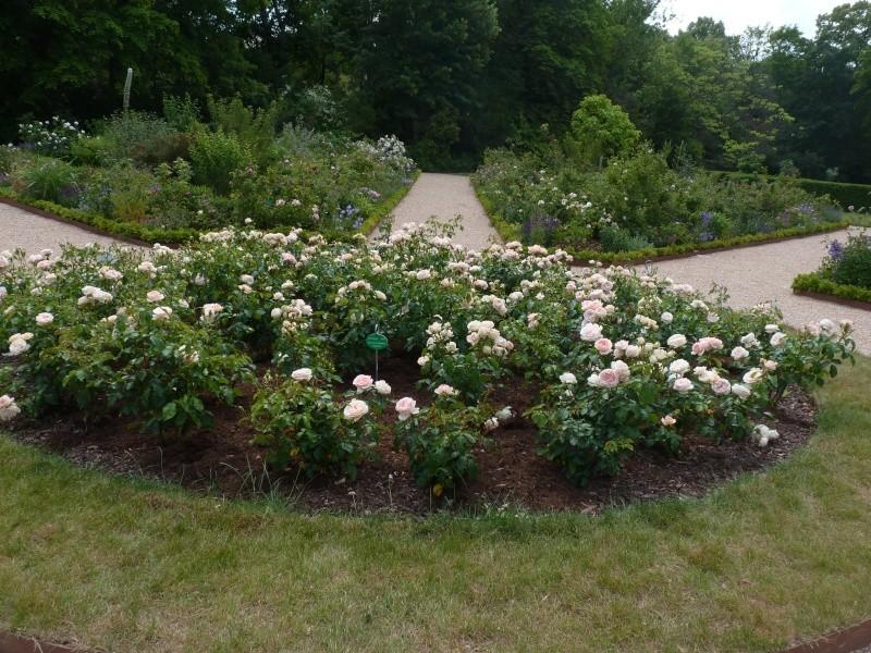 Visite de la roseraie de la Malmaison - Page 3 P1190916