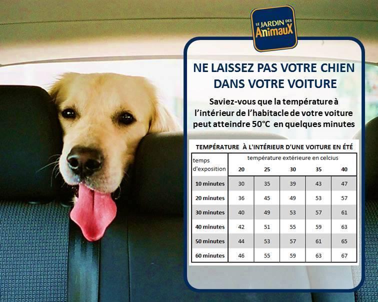 Ne pas laisser un animal dans la voiture 11698510