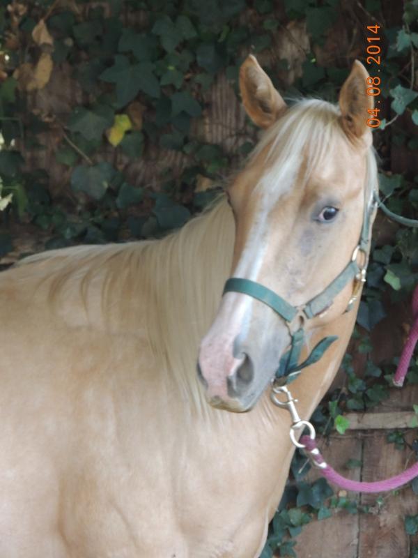 Le cheval toiletté Intere10