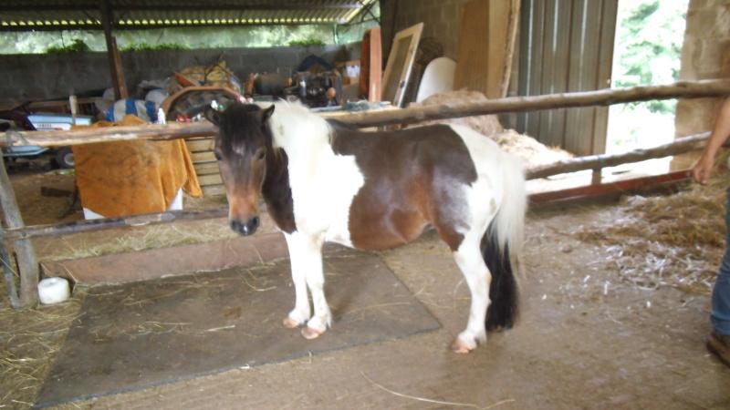 CANNELLE - ONC poney née en 2009 - adoptée en décembre 2013 par Catie - Page 2 2015_630