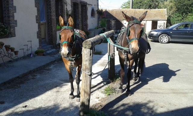 Mon projet d'attelage à 4 mules pas à pas ... - Page 3 11013410