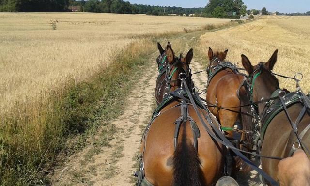 Mon projet d'attelage à 4 mules pas à pas ... - Page 3 11217610