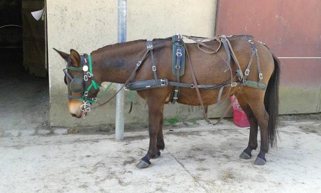 Mon projet d'attelage à 4 mules pas à pas ... - Page 3 11391310