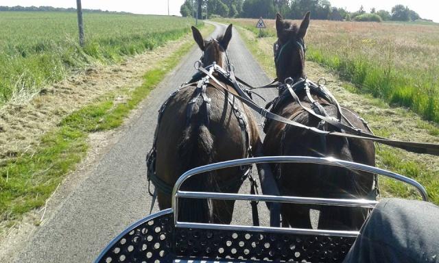 Mon projet d'attelage à 4 mules pas à pas ... - Page 3 11401310