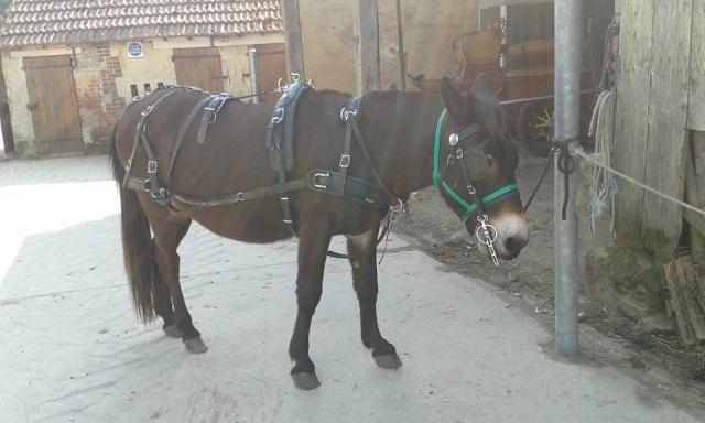 Mon projet d'attelage à 4 mules pas à pas ... - Page 3 11425110