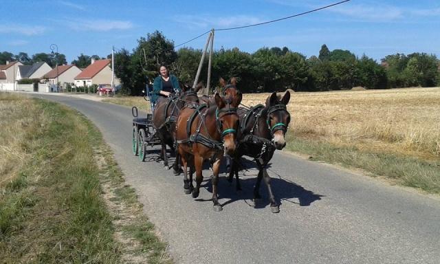 Mon projet d'attelage à 4 mules pas à pas ... - Page 3 11695910