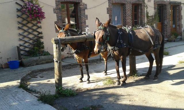 Mon projet d'attelage à 4 mules pas à pas ... - Page 3 11707710