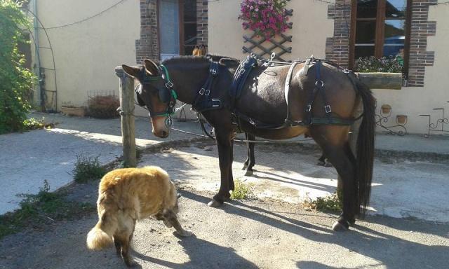 Mon projet d'attelage à 4 mules pas à pas ... - Page 3 11828711