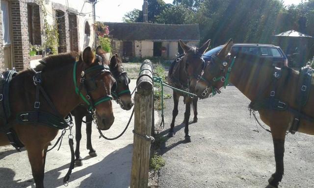 Mon projet d'attelage à 4 mules pas à pas ... - Page 3 18321_10
