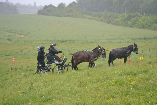 Mon projet d'attelage à 4 mules pas à pas ... - Page 3 Dsc_4911