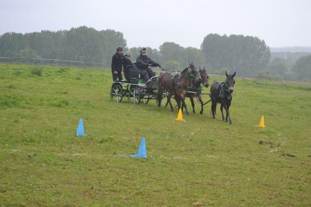 Mon projet d'attelage à 4 mules pas à pas ... - Page 3 Dsc_4912