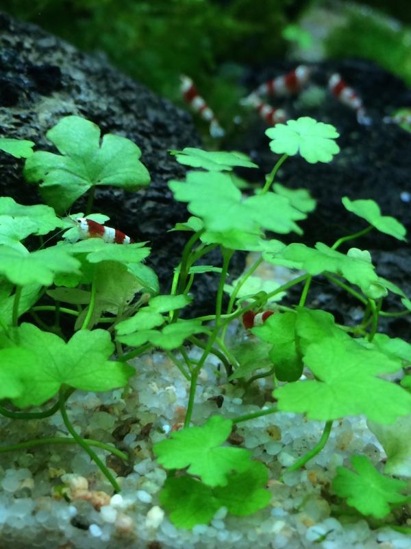 Tiny Secret World (arrivée des crevettes p.3 :D) - Page 2 Image110