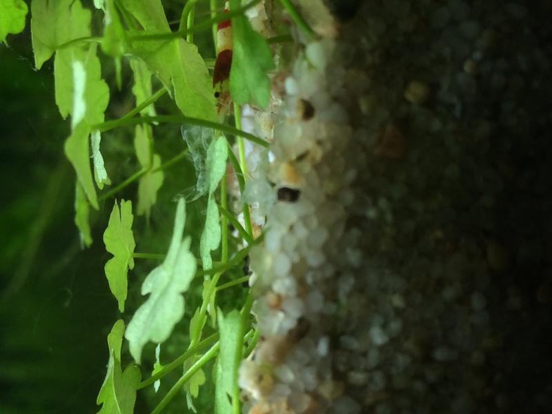Tiny Secret World (arrivée des crevettes p.3 :D) - Page 2 Image19