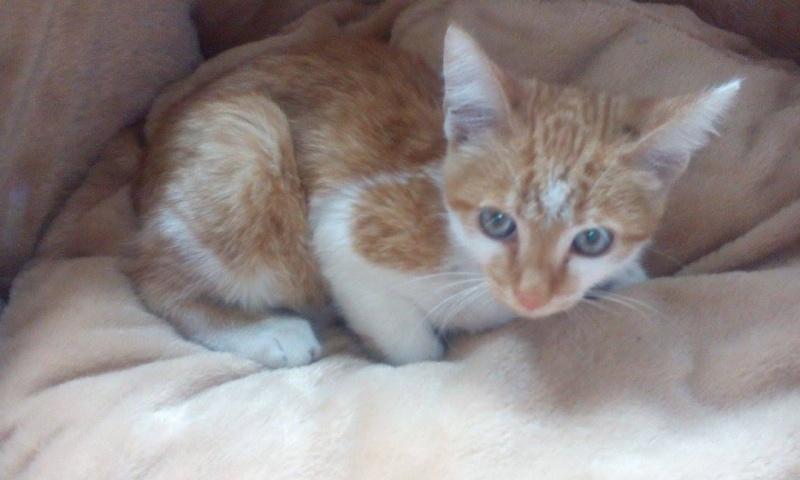 CHAUSSETTE (ex. NUFAR), chaton de 7 mois tapé par une voiture trouvé dans la rue (Pascani) - adopté par Déborah (39) - décédé 11252410