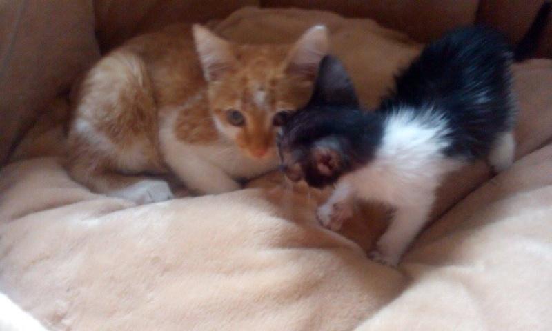 CHAUSSETTE (ex. NUFAR), chaton de 7 mois tapé par une voiture trouvé dans la rue (Pascani) - adopté par Déborah (39) - décédé 11878910