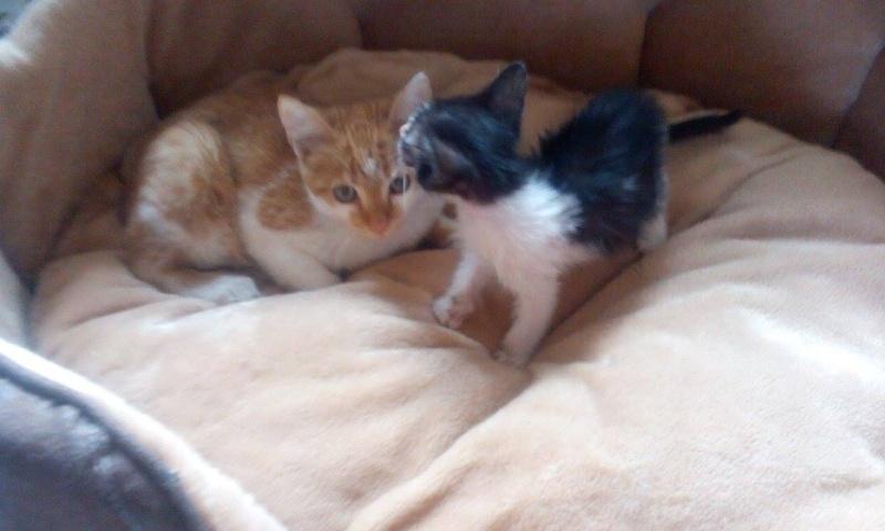 CHAUSSETTE (ex. NUFAR), chaton de 7 mois tapé par une voiture trouvé dans la rue (Pascani) - adopté par Déborah (39) - décédé 11884610