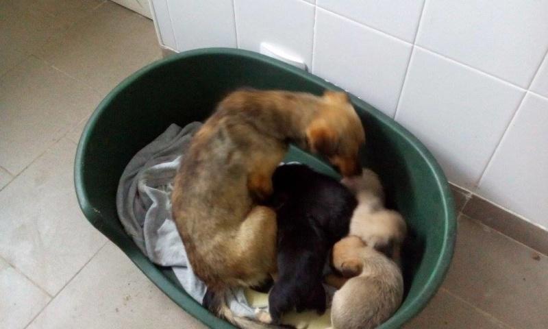 HOPE, petite chienne croisée paralysée trouvée avec ses 4 chiots !!! née env 2013 - à la clinique de Carmina et Mircea (Bucarest) - URGENT 63572421
