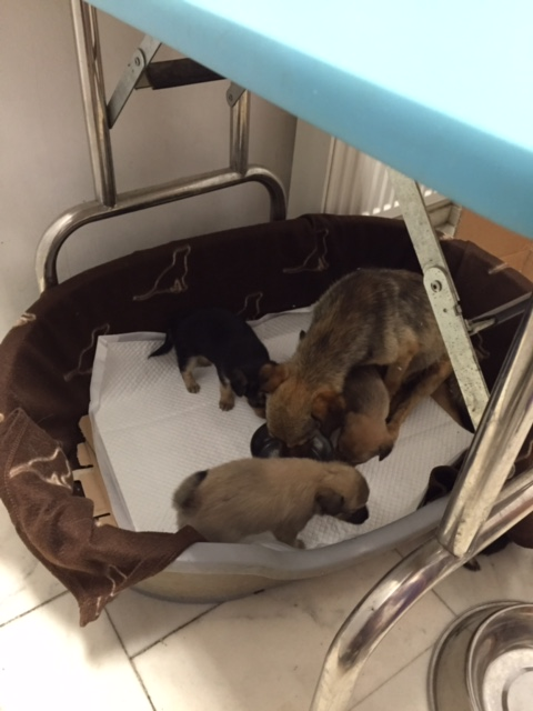 HOPE, petite chienne croisée paralysée trouvée avec ses 4 chiots !!! née env 2013 - à la clinique de Carmina et Mircea (Bucarest) - URGENT Img_0110