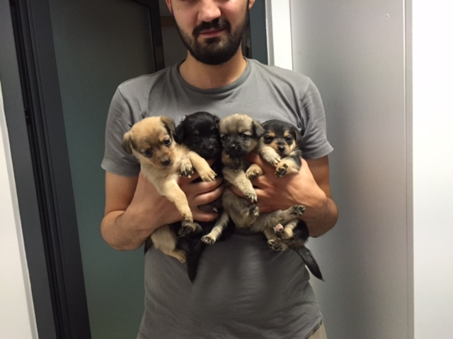 HOPE, petite chienne croisée paralysée trouvée avec ses 4 chiots !!! née env 2013 - à la clinique de Carmina et Mircea (Bucarest) - URGENT Img_0112