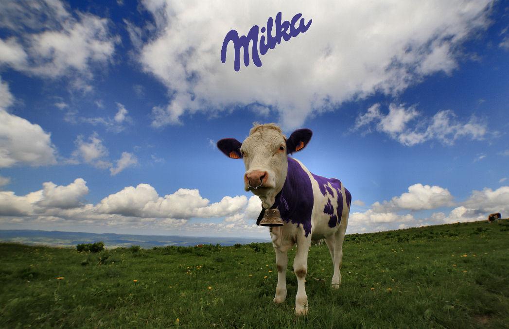 Mmmm...montbéliarde Cow10