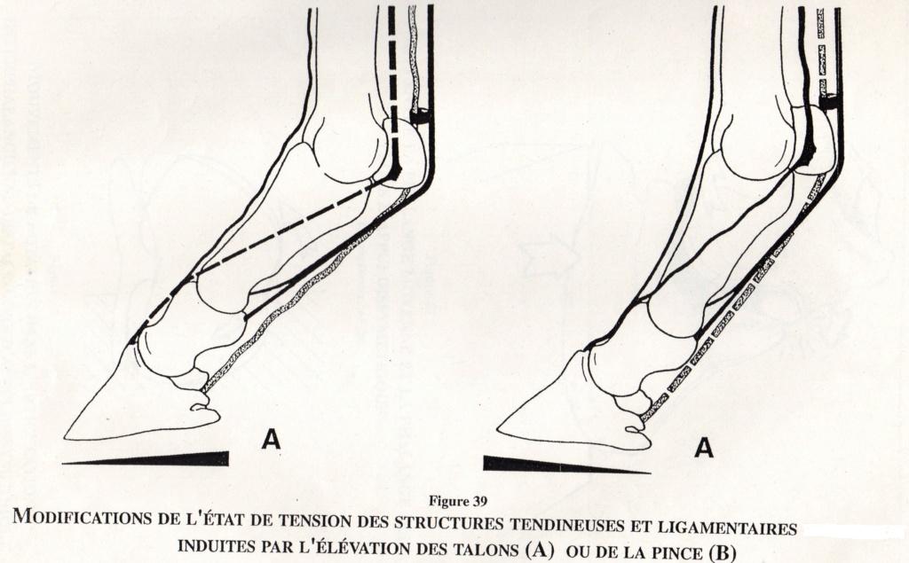 Conséquences des modifications de l'appui du pied Img11310