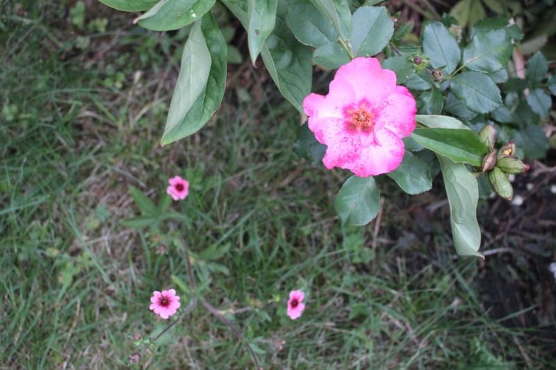jardin des `MAL`AKHIM  - Page 6 Jardiw10