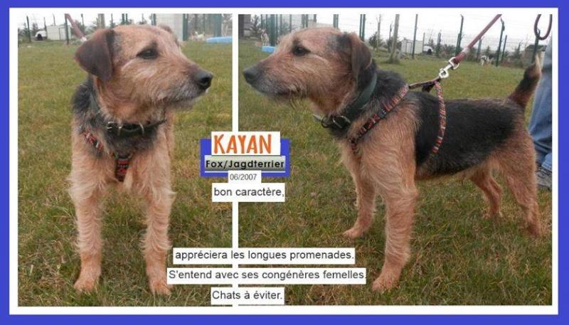 KAYAN  croise Fox/Jagdterrier   12 ans   (4 ans de refuge) -   SPA  DE  MOREE  (41) 11949310