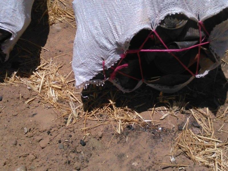 Tri de déchets au camping Serdrar à TAZZARINE (Zone 7) 11336910