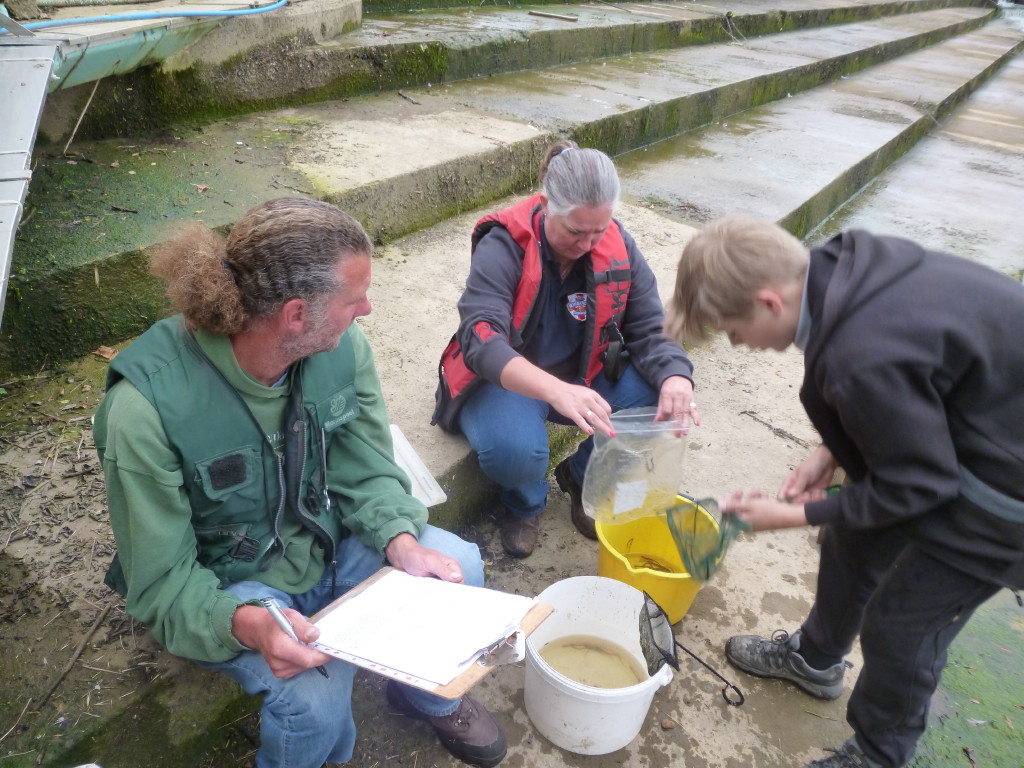 Eel Trap Results 2015 ! - Page 3 P1050417