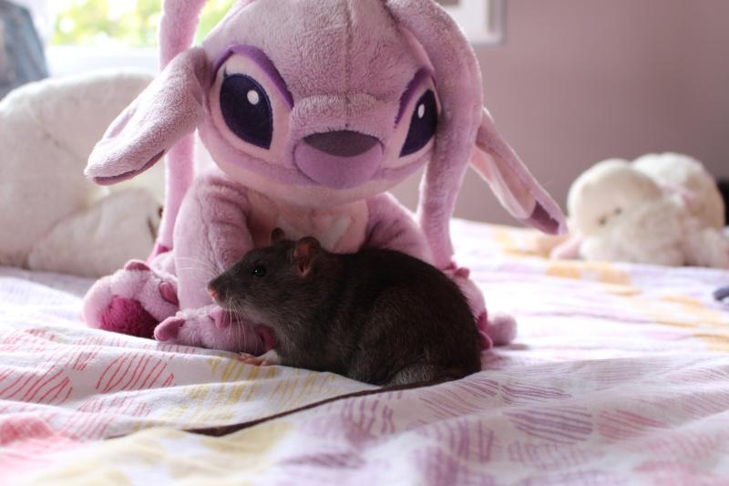 Les petits ratous kinder de miss Tagada 🐀 - Page 5 Img_0110