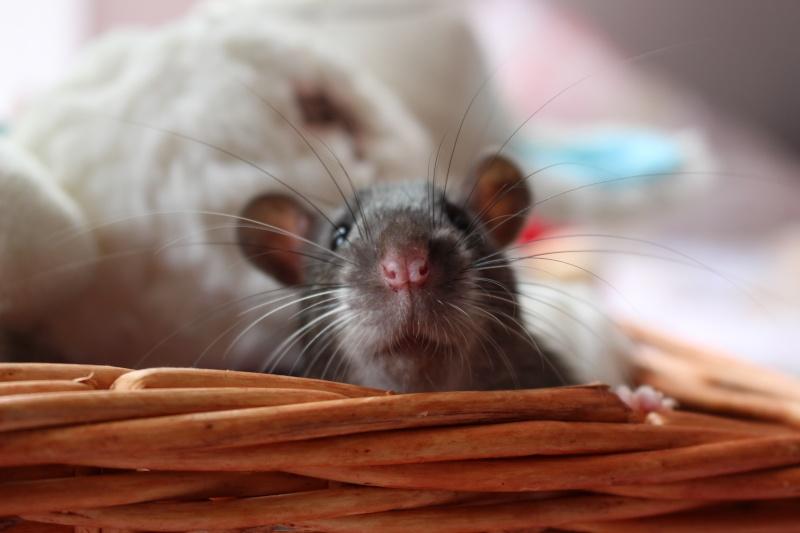 Les petits ratous kinder de miss Tagada 🐀 - Page 5 Img_0112