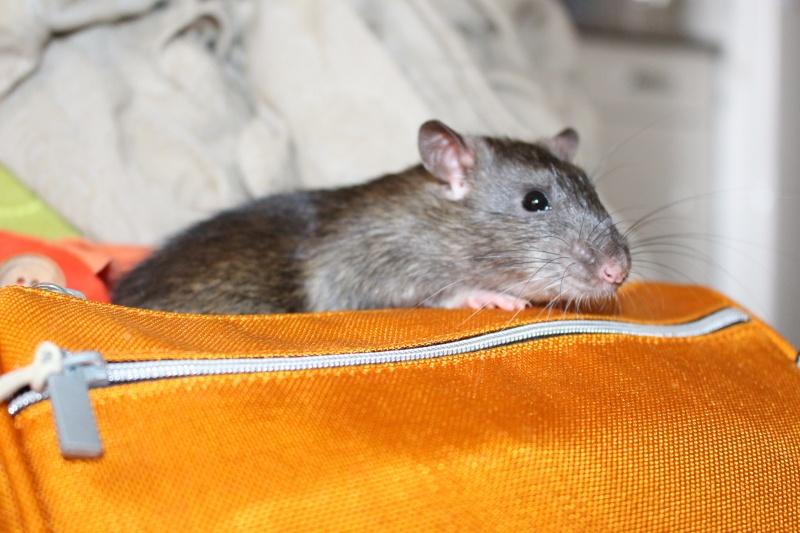 Les petits ratous kinder de miss Tagada 🐀 - Page 5 Img_0114
