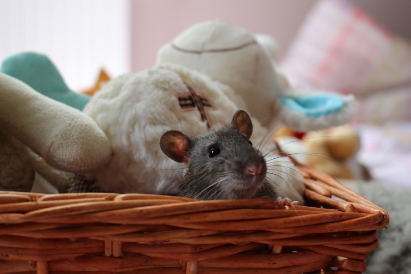 Les petits ratous kinder de miss Tagada 🐀 - Page 5 Img_0115