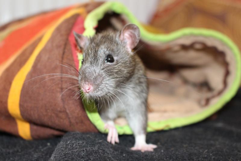 Les petits ratous kinder de miss Tagada 🐀 - Page 5 Img_0210