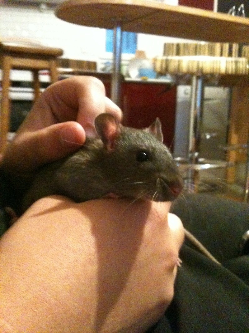 Les petits ratous kinder de miss Tagada 🐀 - Page 5 Img_2211