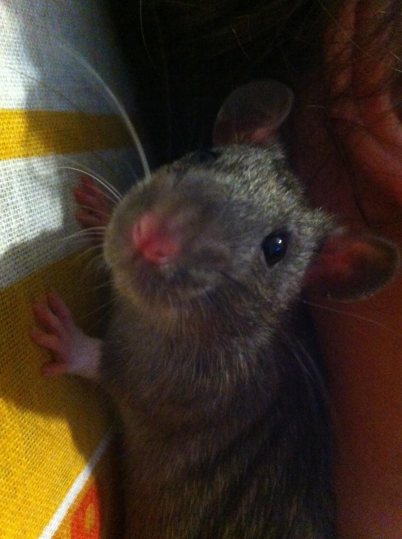 Les petits ratous kinder de miss Tagada 🐀 - Page 5 Img_2212